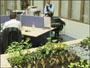 BT's indoor garden is designed to soothe staff