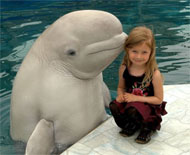 Girl with dolphin - Beautiful Animal Pictures by Vladimir Prelovac