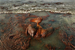 Gulf Oil Spill Ruins Many Lives while Few See Profits