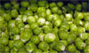 Some vitamin-packed Brussel sprouts. Photograph: Clive Gee/PA
