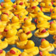 Plastic softening phthalates, like those found in some rubber ducks, pose risks to children