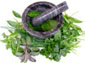 5 herbs for natural health