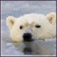 Save Arctic wildlife by supporting this...